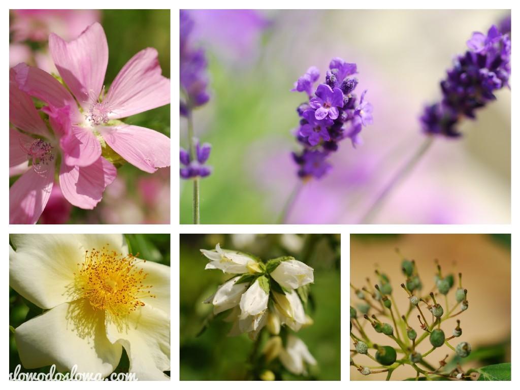 kwiaty'13