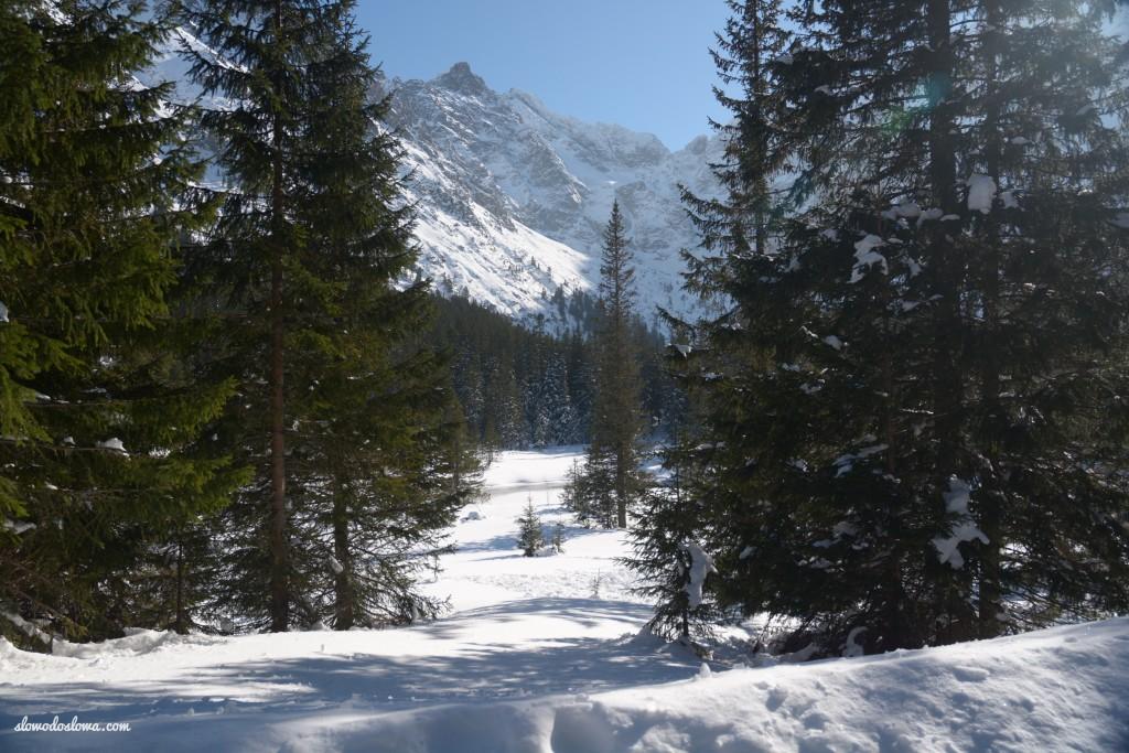 Cepry w Zakopanem, czyli... zimowy urlop na Podhalu, cz. 3