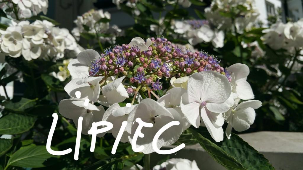 Miesiąc w obiektywie - LIPIEC' 16