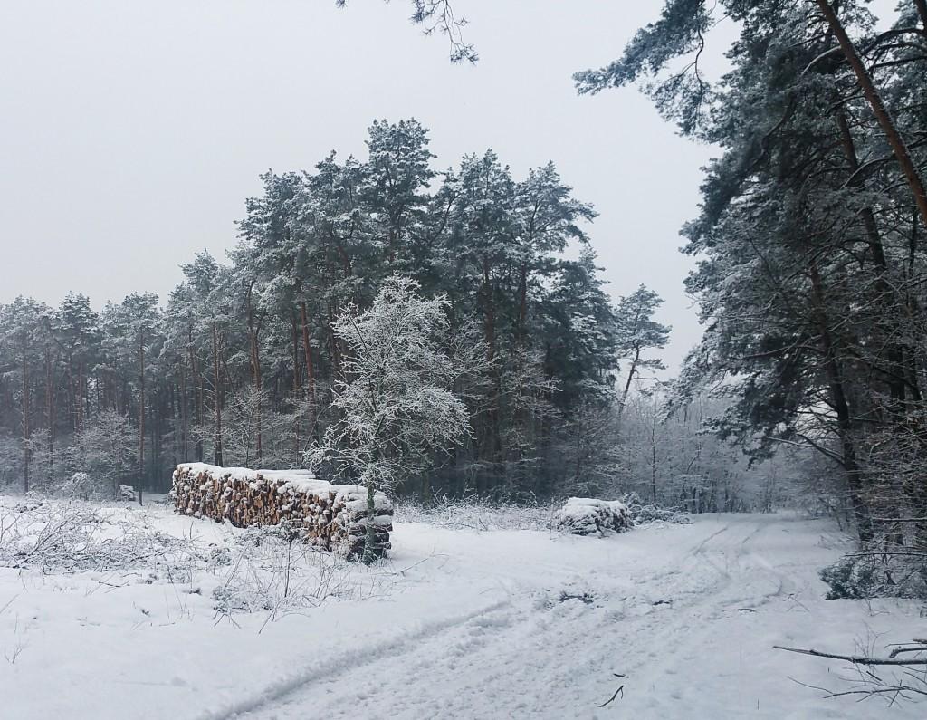 Zima na Kujawach