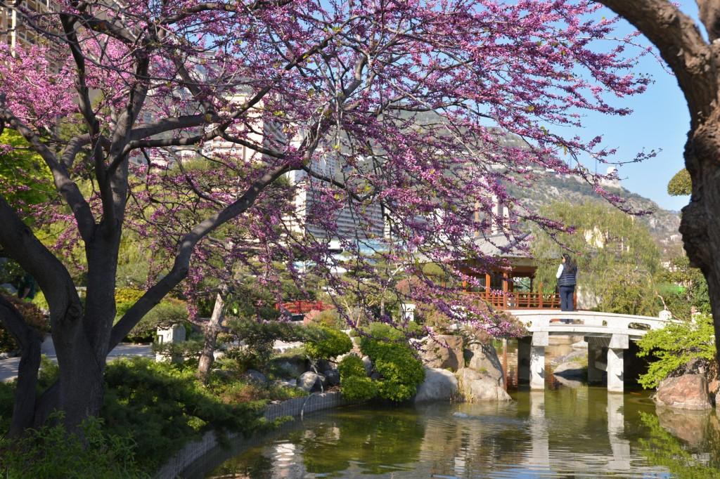 Monako - Ogród japoński