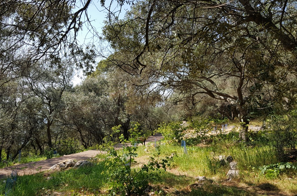 Las na Mont Baron, Nicea