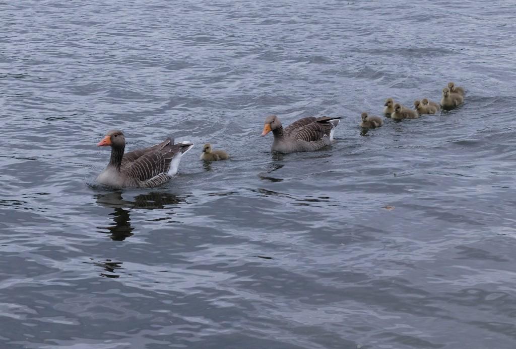 Rodzinny spacer w Hyde Parku