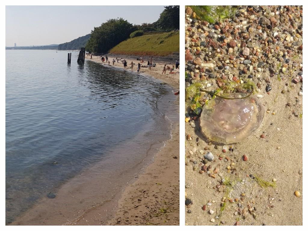 Bałtyk z meduzami