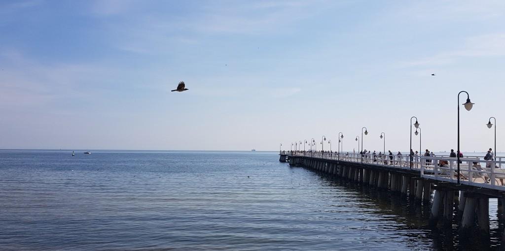 Gdynia Molo w Orłowie
