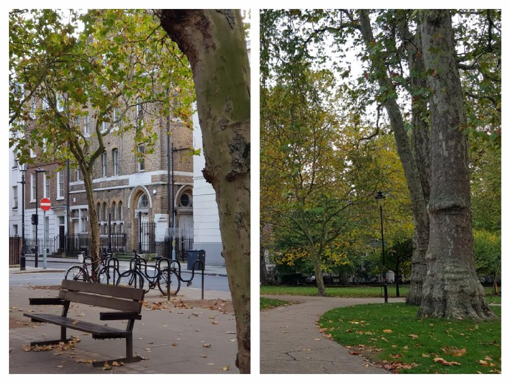 1. Jesień w parkach