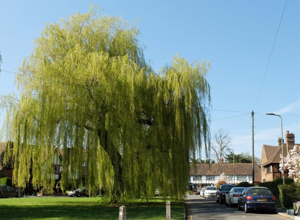 1. Finchley
