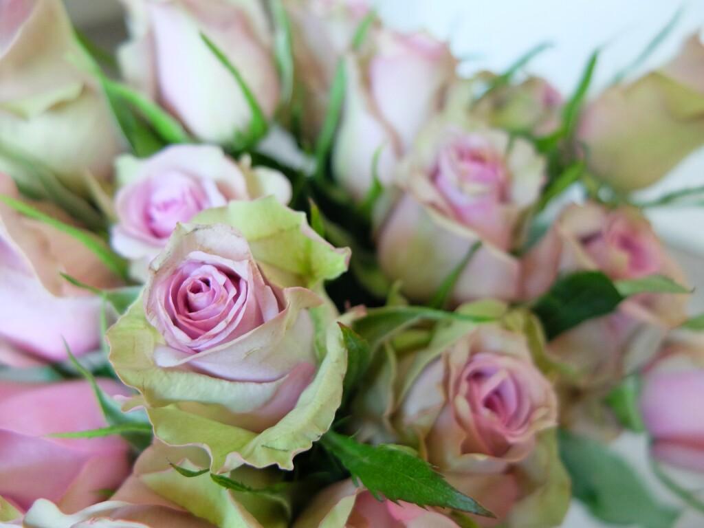 1. Róże