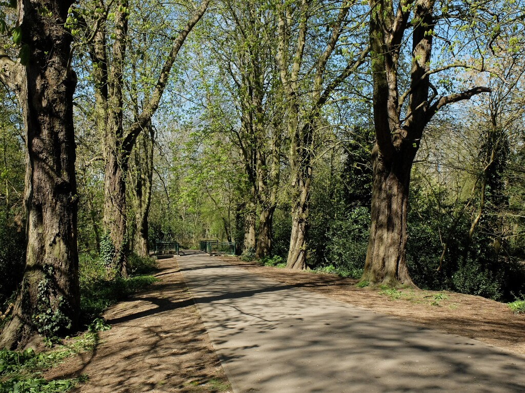 Spacer po lesie, Finchley