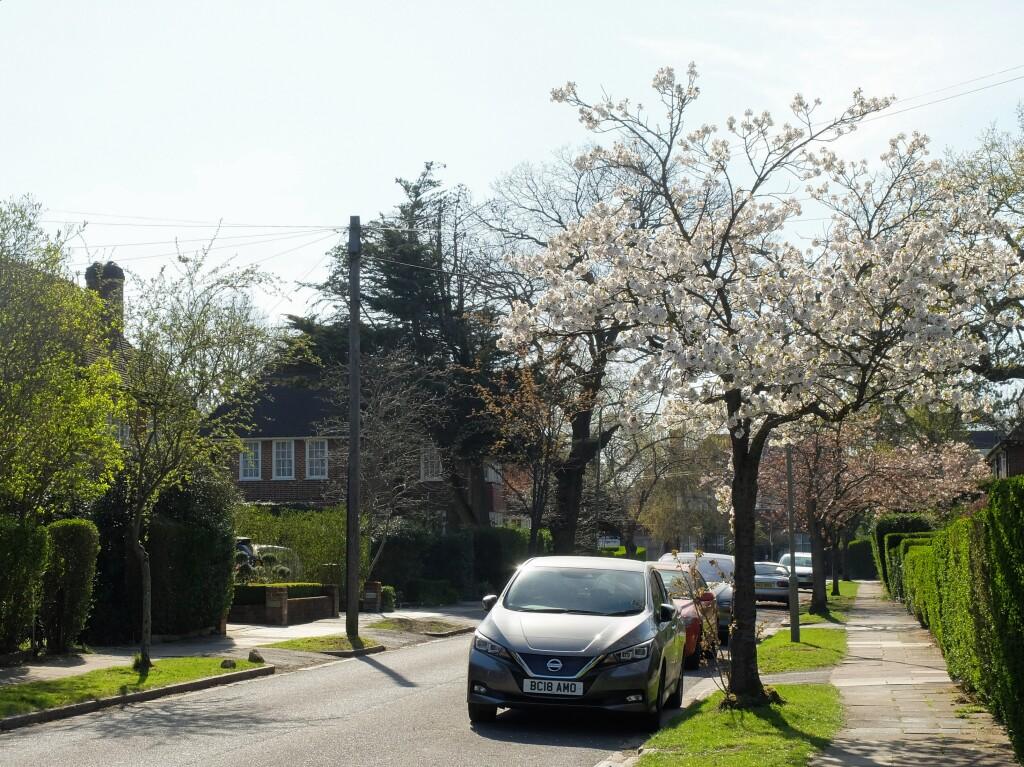 Wiosna w Finchley
