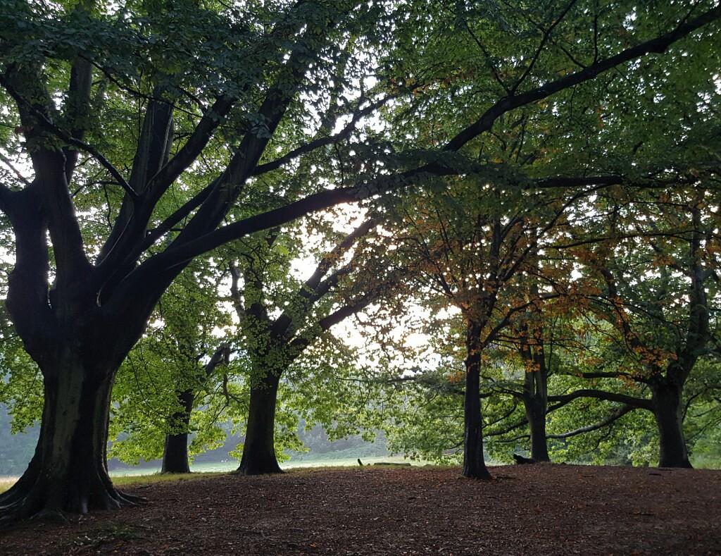 Hampstead Heath - w parku